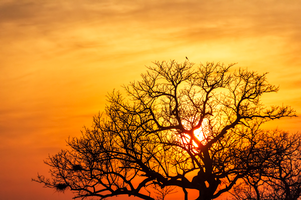 Yellow Sunset in Africa